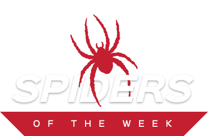 Spiders of the Week